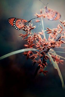 Różowe motyle
