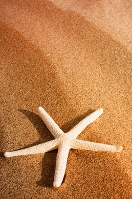 Starfish And Sand