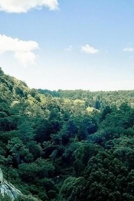 Bright Green Jungle