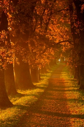 Autumn Tree Road