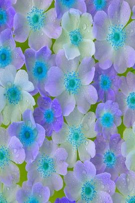 Purple & Blue Flowers 01
