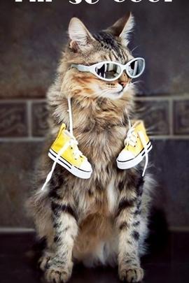 Прохолодний кіт