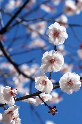 Whitey Floweriness