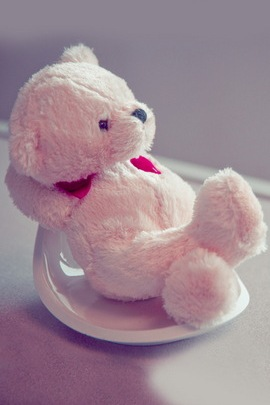 Cute Teddy