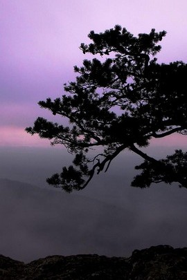Single Big Tree With Purple Skies