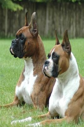 Wild Dogs Animals