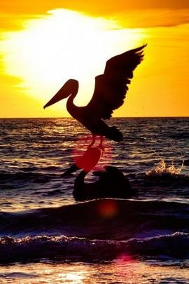 Stork Prey