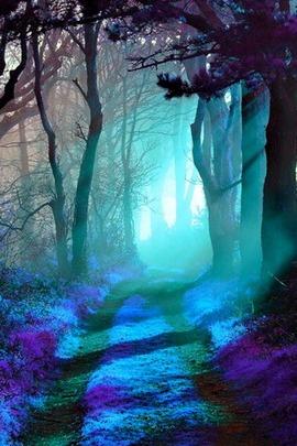 Magic Wood