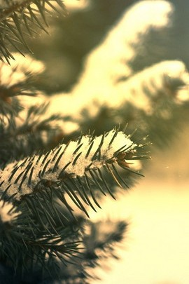 Snow Tree Branch