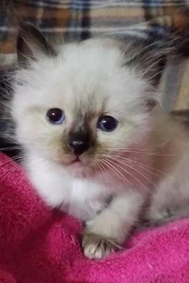 Bellissimo gattino