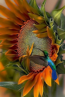 Sunflower Bird