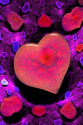 Love Anemones 02
