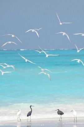 पक्षी और सागर