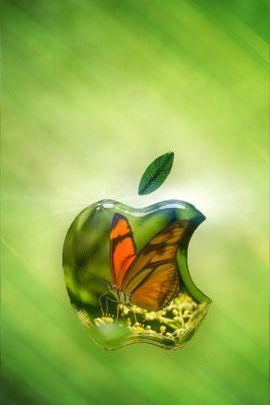 Bướm Glass Apple