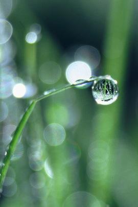 Raindrop Nature