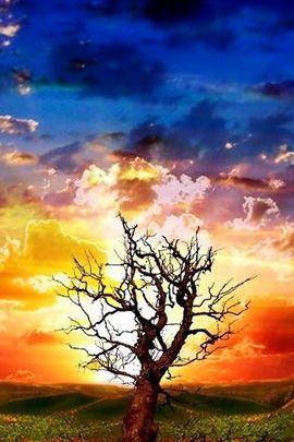 वृक्ष तथा आकाश