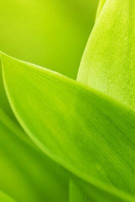 Cyan Leaf Macro