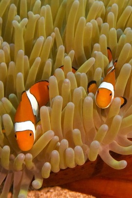 Underwater World (Fish)