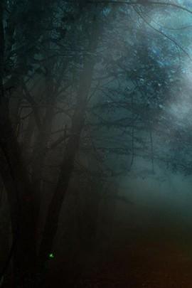 Visão noturna da árvore