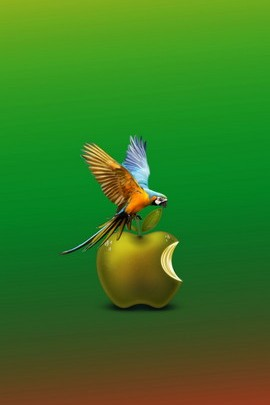 Parrot And Apple 1