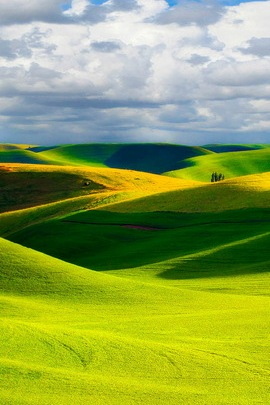 Paysage naturel vert