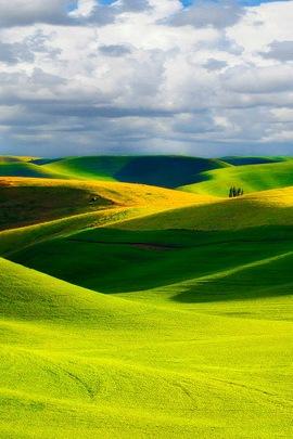 Green Natural Scenery