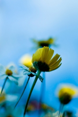 Fleurs mignonnes