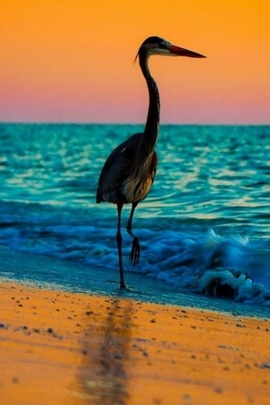 Paradise Sea Bird