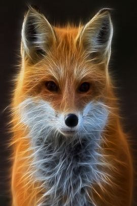 Fractal Fox