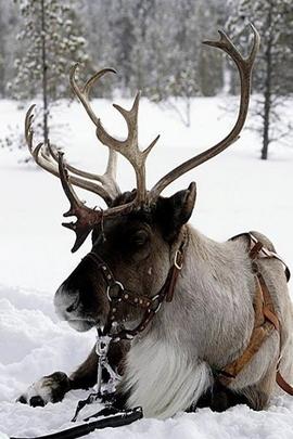 Salji dan haiwan