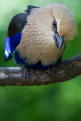 Lonely Bird