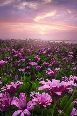 Fiori Di Primavera Sfondo Scarica Sul Tuo Cellulare Da Phoneky