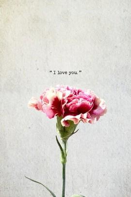 Carnation Love