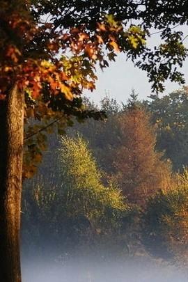 सूखी पेड़