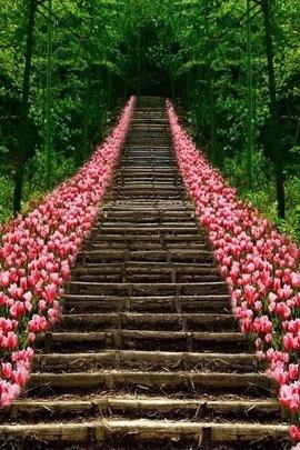 Bahar çiçekleri