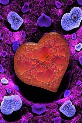 Love Anemones 01