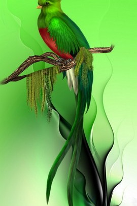 Burung syurga