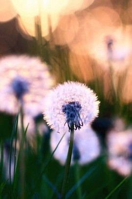 زهور الازهار
