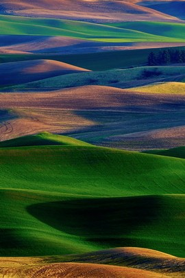 Palouse Painting