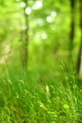 Bokeh Forest Grassland
