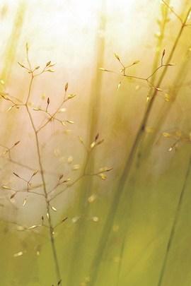 Flor de Erva Daninha