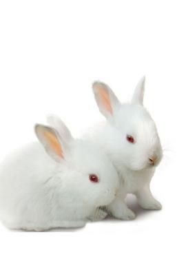 أرنب دبليو