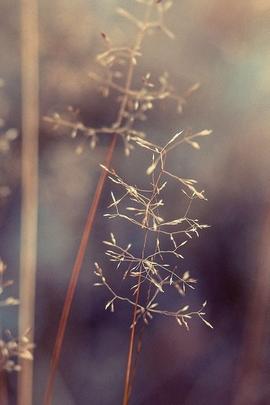 Leaf Field