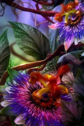 놀라운 꽃