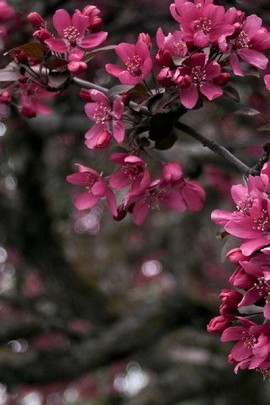 Flowery Tree Branches