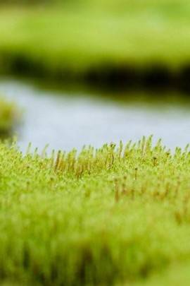 Grass And The River