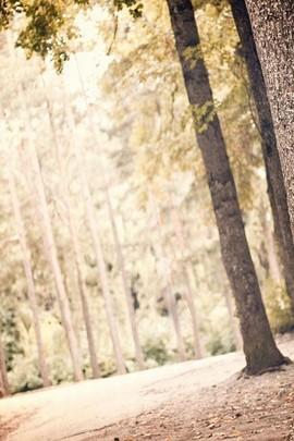 Sıska Ağacı