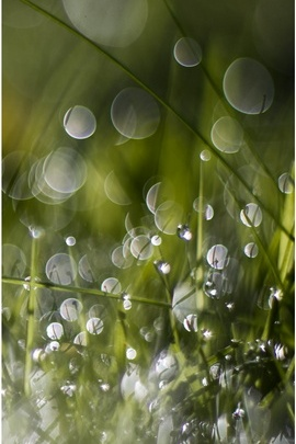 Wet Grass Bokeh