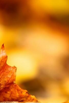 Half Autumn Leaf