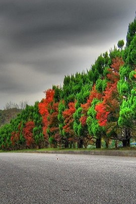 Green And Red Tree Leaves